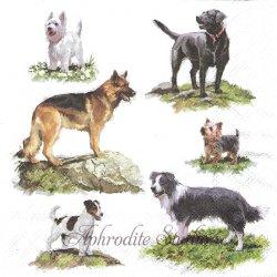 DOGS 6種類の犬 1枚 バラ売り 33cm ペーパーナプキン デコパージュ用 Ambiente