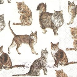 MY FAVORITE CAT お気に入りのネコたち 猫 1枚 バラ売り 33cm ペーパーナプキン Ihr