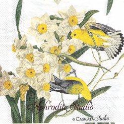 25cm CASKATA STUDIO GOLDFINCH ゴールドフィンチ 小鳥  1枚 バラ売り ペーパーナプキン Ihr