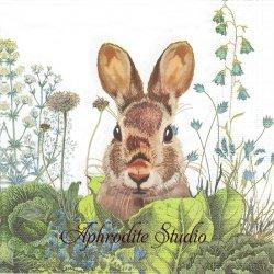 Chou Chou Bunny お庭の茶毛の兎 バニー ラビット イースター アーティスト物 Fab Funky 1枚 バラ売り 33cm ペーパーナプキン ppd