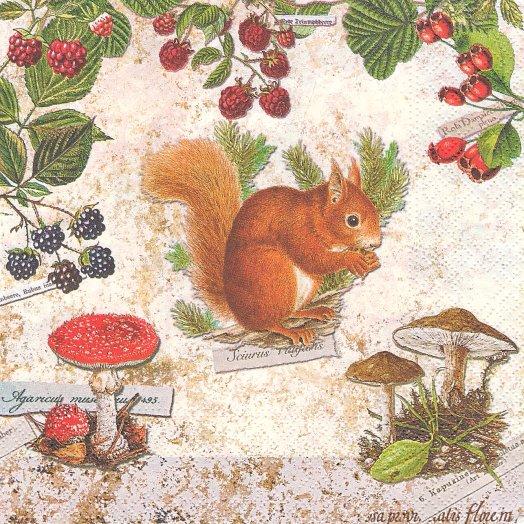 1パック20枚 廃番 Squirrel ベリーと子リス きのこ 33cm ペーパーナプキン Nouveau
