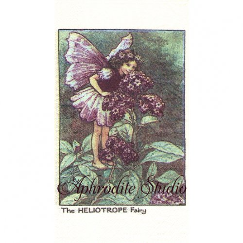フラワーフェアリーズ ヘリオトロープの花の妖精 ペーパーナプキン 1枚 40x33cm デコパージュ バラ売り Flower Fairies