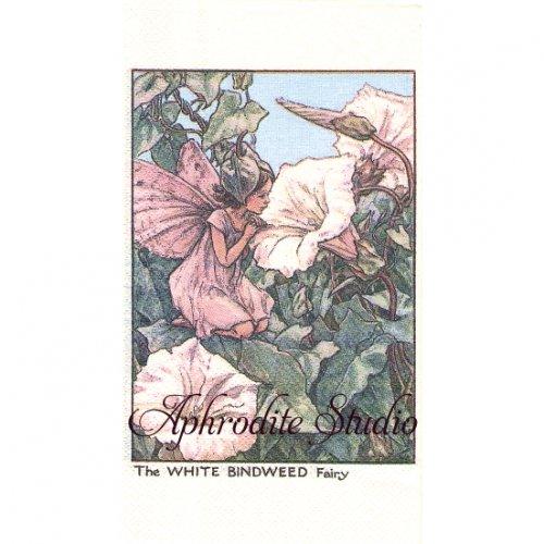 フラワーフェアリーズ 朝顔の花の妖精 ペーパーナプキン 1枚 40x33cm デコパージュ バラ売り Flower Fairies
