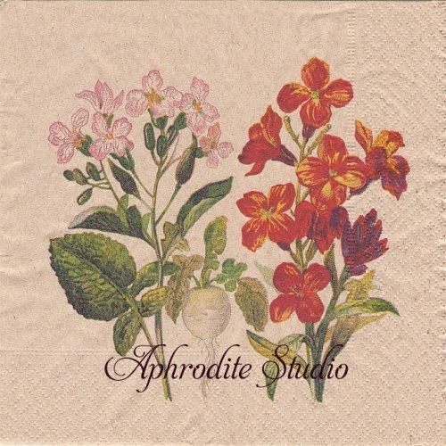 Botanical  ピンクと紅の花 1枚 バラ売り 33cm ペーパーナプキン Naturals