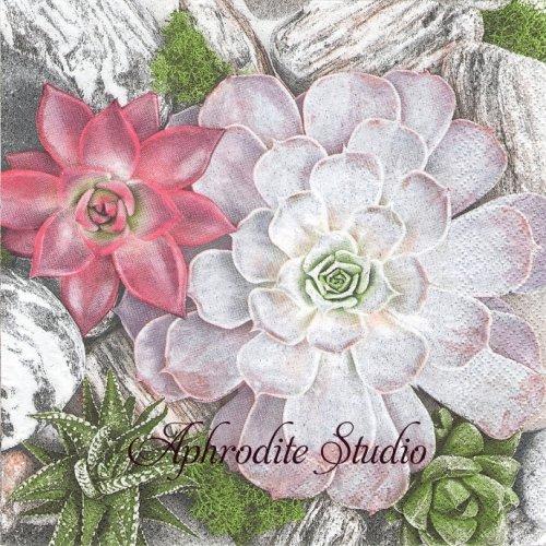 《プレビュー中・発注前》写真 Succulent Plants and Stones Composition 多肉植物と石 1枚 バラ売り 33cm ペーパーナプキン Maki