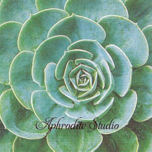 《プレビュー中・発注前》写真 In the Desert 多肉植物 1枚 バラ売り 33cm ペーパーナプキン ppd