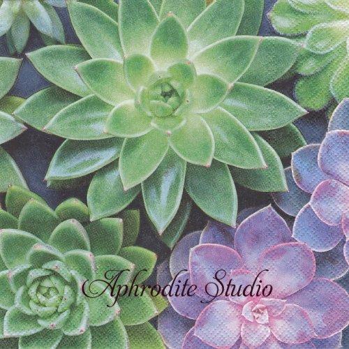 《プレビュー中・発注前》写真 Sinikka 多肉植物 1枚 バラ売り 33cm ペーパーナプキン Stewo