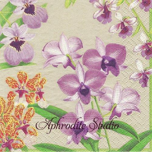 25cm カスパリ Orchid show 蘭 お花  1枚 バラ売り ペーパーナプキン  Caspari