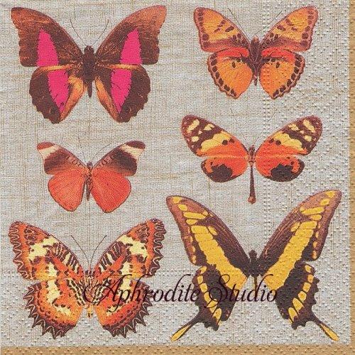 25cm カスパリ Deyrolle butterflies 蝶 1枚 バラ売り ペーパーナプキン Caspari