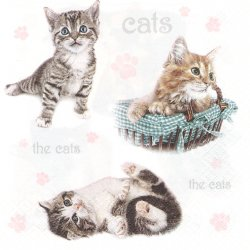 廃盤 Small Kittens 子猫 the cat キャット 1枚 バラ売り 33cm ペーパーナプキン デコパージュ Daisy