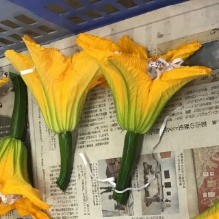 花ズッキーニ