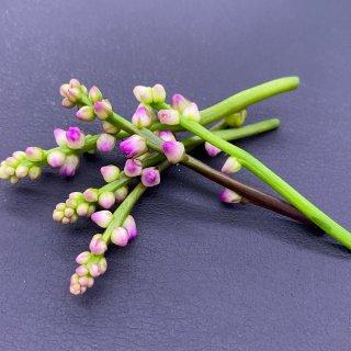 つるむらさきの花(1パック/約30本)