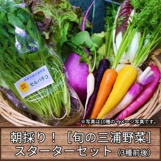 朝採り旬の三浦野菜お手軽セット