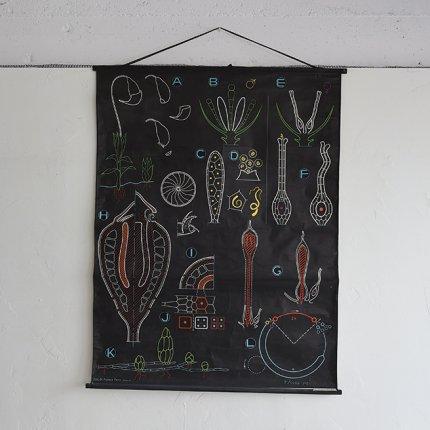 フレーム付きポスター 植物