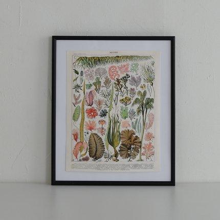 フレーム付 ポスター/海藻