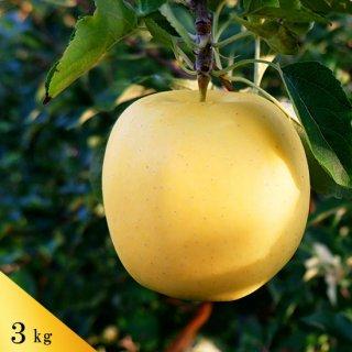 もりのかがやき(葉とらずりんご)約3kg(約9〜10個)モールド詰※10月下旬頃から発送予定です