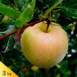 青森りんご トキ[贈答用]約3kg(約9〜12個)モールド詰※今期の販売は終了いたしました