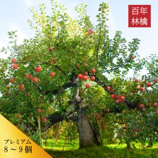 百年林檎(約8〜9個)※数量限定