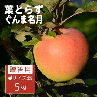 葉とらずぐんま名月【贈答用】サイズ混合5kg(約14-18個)モールド詰※10月下旬から発送予定