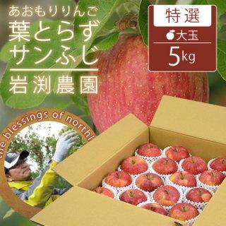 葉とらずサンふじ【特選】大玉5kg(約14-16個)キャップ詰