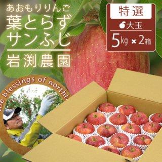 葉とらずサンふじ【特選】大玉5kgx2(約28-32個)キャップ詰