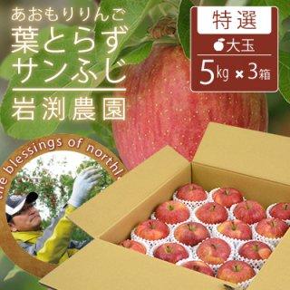 葉とらずサンふじ【特選】大玉5kgx3(約42-48個)キャップ詰