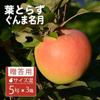 葉とらずぐんま名月【贈答用】サイズ混合5kgx3(約42-54個)モールド詰※10月下旬から発送予定