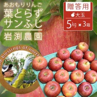葉とらずサンふじ【贈答用】大玉5kg×3箱(約42-48個)モールド詰