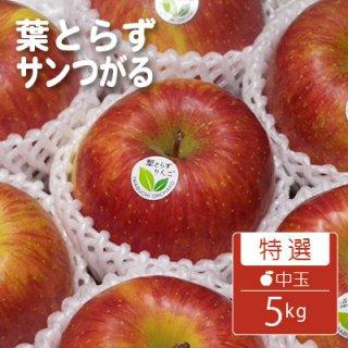 葉とらずサンつがる【特選】中玉5kg(約16-20個)キャップ詰※9月上旬から発送予定