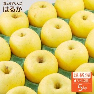 葉とらずはるか【規格混合】5kg(約16-20個)モールド詰※お一人様3箱まで※12月初旬から発送予定