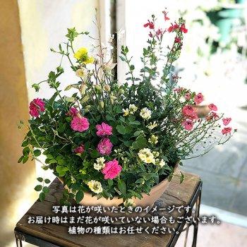 [母の日の寄せ植え]10Flowers ミックス