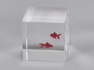 クレア金魚(c)zeromission