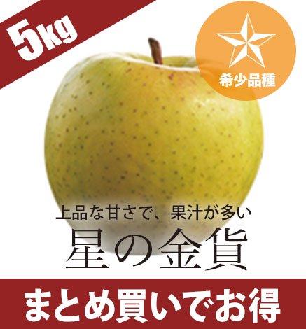 【予約】【希少品種】青森りんご 星の金貨 4.5kg(14〜20個)