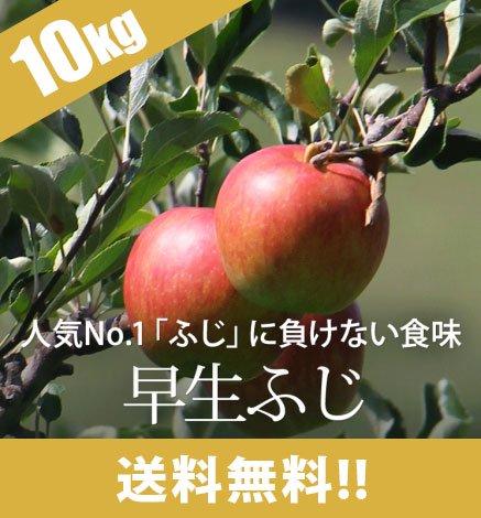 【10月上旬〜】早生ふじ( 弘前ふじ )9kg(24〜40個)