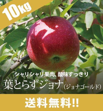 【10月下旬〜】青森りんご 葉とらずジョナ(ジョナゴールド) 9kg(26〜40個)