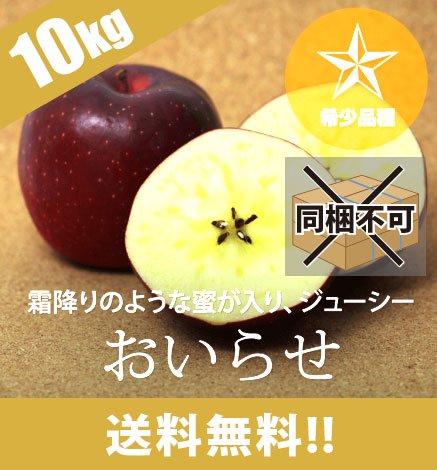 【10月下旬〜11月上旬】【希少品種】青森りんご おいらせ 9kg(18〜40個)