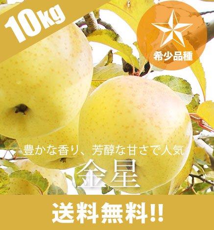 【希少品種】青森りんご サン金星 9kg(26〜40個)
