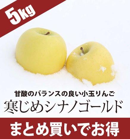 青森りんご 寒じめシナノゴールド  4.5kg(18〜28玉)