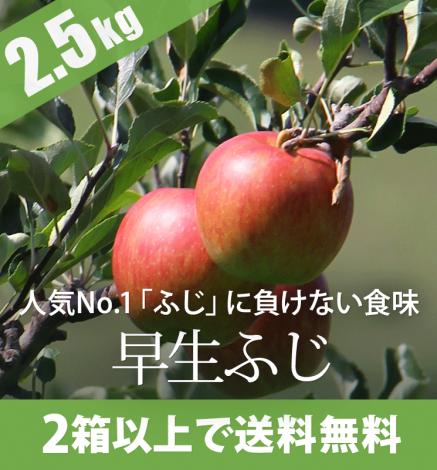 【10月上旬〜】早生ふじ(弘前ふじ )2.5kg(6〜10個)