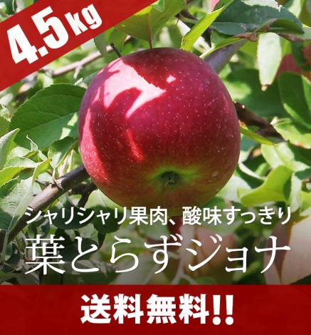 【販売中】青森りんご 葉とらずジョナゴールド 4.5kg(14〜20個)