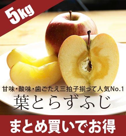 青森りんご 葉とらずふじ 4.5kg(12〜20個)