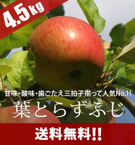 青森りんご 葉とらずふじ 4.5kg(14〜20個)