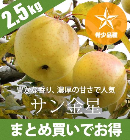 【希少品種】青森りんご サン金星 2.5kg(6〜10個)