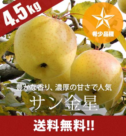 【予約】【希少品種】青森りんご サン金星 4.5kg(14〜20個)
