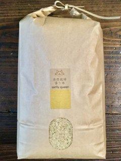 香り米 サリークイーン 100g(長粒種 玄米)
