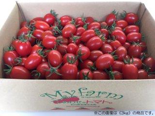 《お買い得1kg》「しあわせのトマト。」(アイコ)