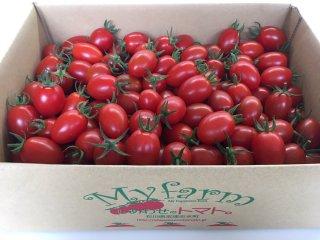 《お買い得3kg》「しあわせのトマト。」(アイコ)