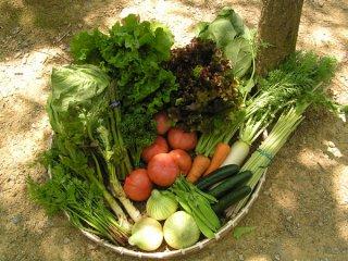 内子産旬の野菜セット毎月一回定期便(クール便送料込) 対象地域:関東〜九州