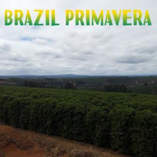 ブラジル プリマベーラ農園[100g]