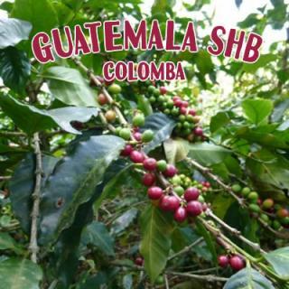グアテマラ SHB コロンバ農園[100g]
